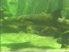 aquariu5
