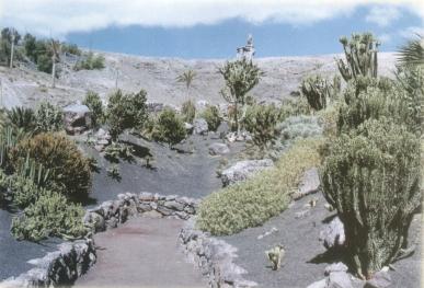 kaktus7