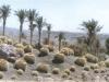 kaktus11