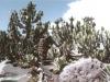 kaktus13