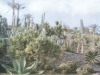 kaktus9