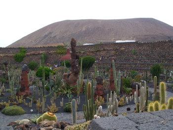 kaktus10