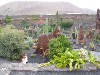 kaktus12