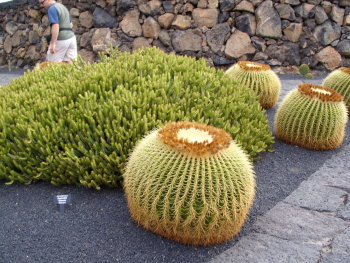 kaktus17