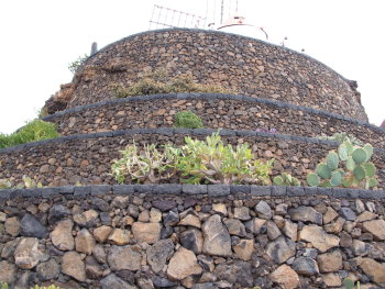 kaktus19