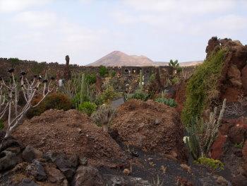kaktus51