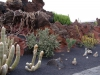 kaktus15