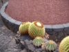kaktus30