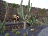 kaktus40