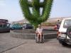 kaktus54