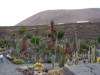 kaktus8